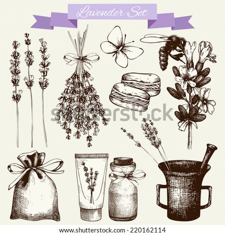 Vector set of ink hand drawn lavender illustration in lilac color. Vintage collection of lavender flowers sketch - stock vector