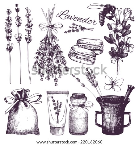 Vector set of ink hand drawn lavender illustration in lilac color. Vintage collection of lilac lavender flowers sketch isolated on white - stock vector