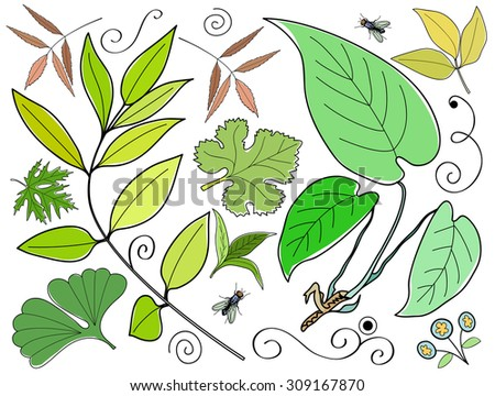 Vector set of leaves, branches, swirls, insects. Leaf collection isolated. Vintage floral elements.  Hand drawn design elements. - stock vector