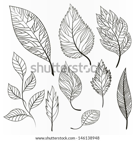 Vector set of leaves, collection of hand-drawn leaves - stock vector