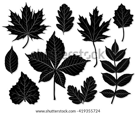 Vector set of leaves silhouette  - stock vector