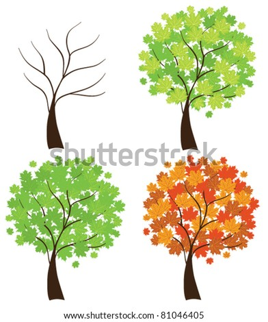 vector set of maple trees - stock vector