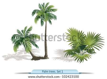 Vector set of palm  trees. Part 1 - stock vector