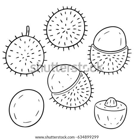 vector set of rambutan