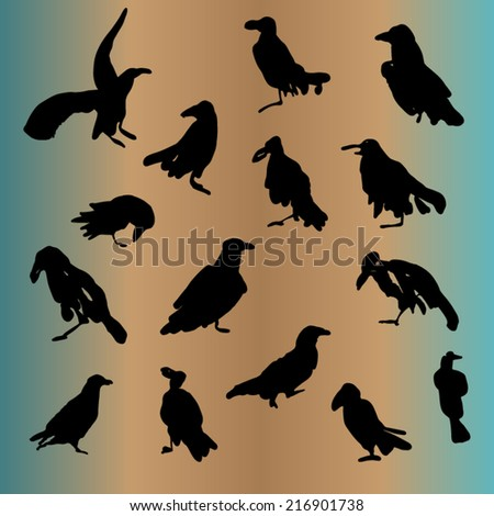 Vector set of ravens ink drawn silhouettes isolated - stock vector