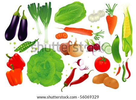 Vector set of raw vegetables. - stock vector