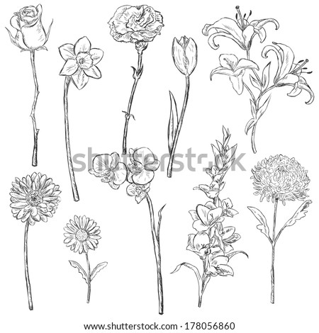 Flower Sketch Stock Photos Images amp Pictures Shutterstock