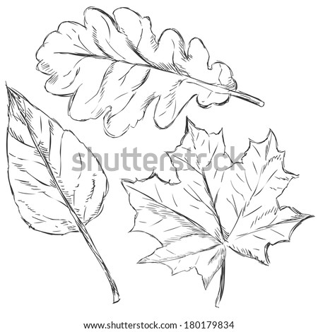Vector Set of Sketch Leaves - stock vector