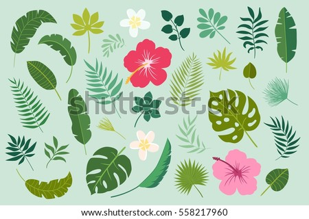 Vector set of tropical leaves. Palm leaf, banana leaf, hibiscus, plumeria flowers. Jungle trees.Botanical (floral) illustration