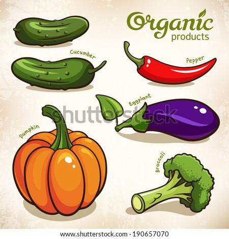 Vector set of vegetables: eggplant, pepper, broccoli, pumpkin, cucumber - stock vector