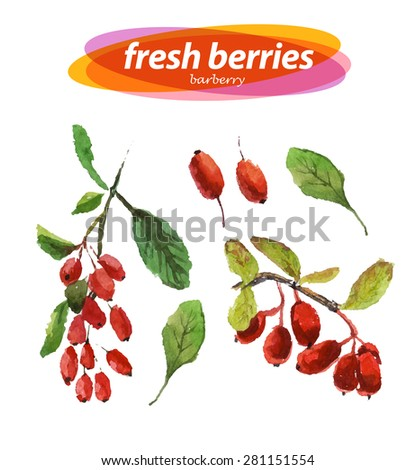 Vector set of watercolor barberry elements on white background. Cute illustration is good for magazine or book, poster and card design, menu cover. - stock vector