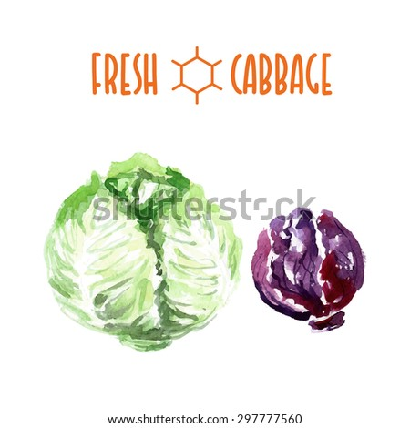Vector set of watercolor cabbage elements on white background. Cute illustration is good for magazine or book, poster and card design, menu cover. - stock vector