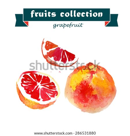Vector set of watercolor grapefruit elements on white background. Cute illustration is good for magazine or book, poster and card design, menu cover. - stock vector