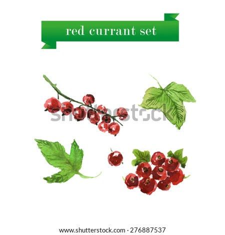 Vector set of watercolor red currant on white background. Fresh food illustration. Good for magazine and book articles, poster design.