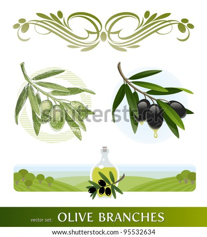 Vector set - olive branches - stock vector