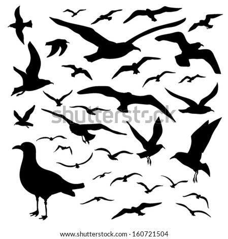 Vector set - seagull silhouette on white background - stock vector