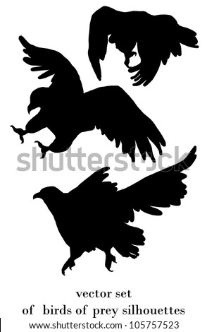 vector set with birds of prey silhouettes