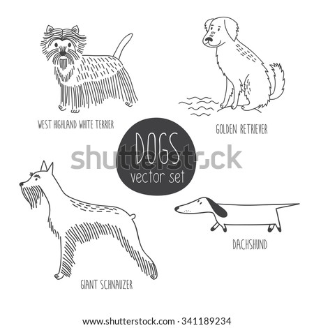 Vector set with cute cartoon dos of different breeds: West Highland White Terrier, Golden Retriever, Giant Schnauzer, Dachshund. - stock vector