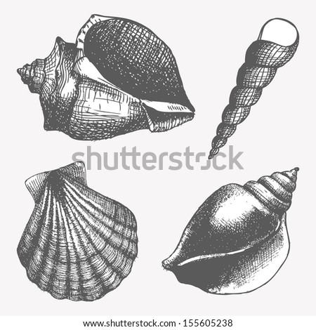 Vector set with hand drawn  sea shell isolated on white. Vintage shells with engraving elements. Vector illustration. - stock vector