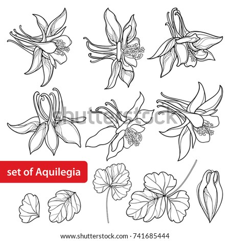 Vector Set With Outline Ornate Aquilegia Or Columbine Flower Bud And Leaf In Black Isolated