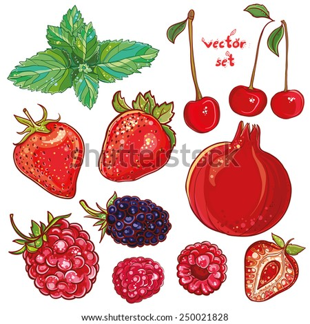 Vector set with pomegranate, strawberry, mint, cherry, raspberry, blackberry. Illustration of small fruits and berries. Fresh, juicy and colored. eps 10 - stock vector