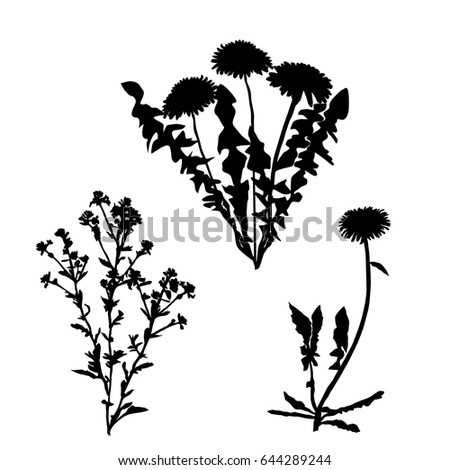 Wildflower Silhouette Stock Images, Royalty-Free Images ...