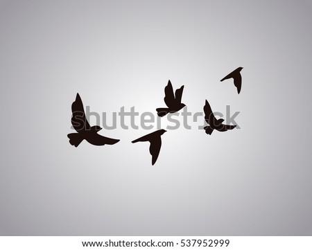 vector silhouette flying birds on white stock vector
