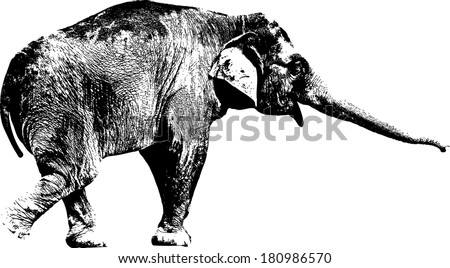 Vector silhouette of an Asian Elephant scientifically known as Elephas Maximus.  - stock vector