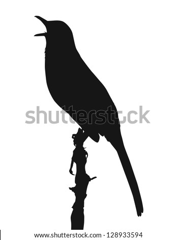 Vector silhouette of Brown Thrasher (Toxostoma rufum) - stock vector