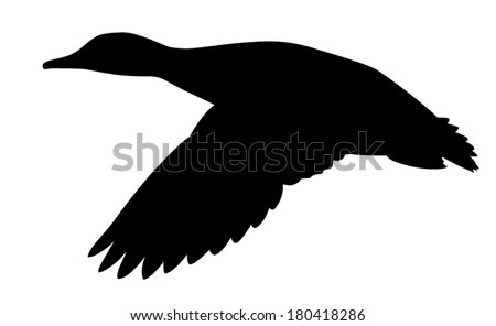 vector silhouette of mallard duck in flight