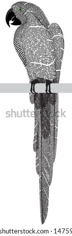 Vector silhouette of the big parrot of newspaper columns texture. Text on the newspaper unreadable.