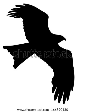 Vector silhouette of the Bird of Prey in flight. - stock vector