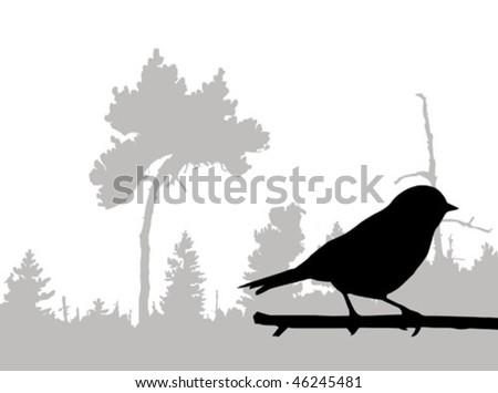 vector silhouette of the bird on branch - stock vector