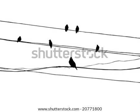 vector silhouette of the birds of the waxwings on wire - stock vector