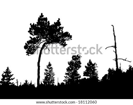 vector silhouette of the crooked pine in wood - stock vector