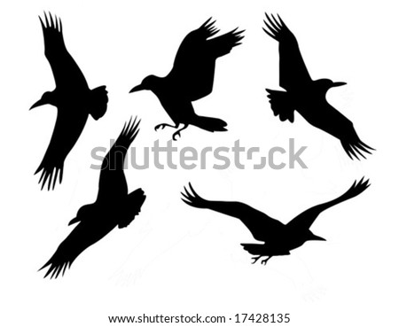 vector silhouette of the group raven isolated on white background - stock vector