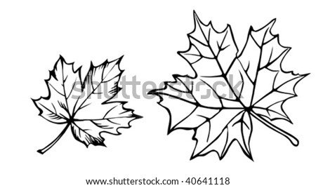 vector silhouette of the maple leaf on white background - stock vector