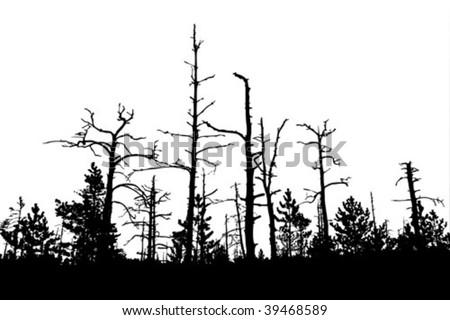 vector silhouette of the old pine on white background - stock vector