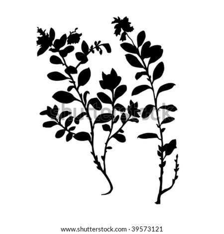 vector silhouette of the plant of the cowberry on white background - stock vector