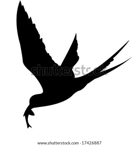vector silhouette of the sea bird on white background - stock vector