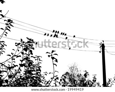 vector silhouette of the waxwings on electric wire - stock vector