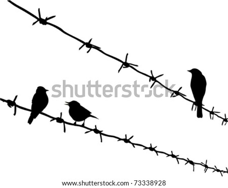 vector silhouette three birds on barbed wire - stock vector