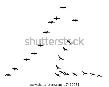 vector silhouettes flock geese isolated on white background - stock vector