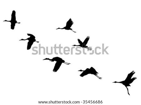 vector  silhouettes flying cranes - stock vector