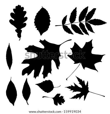 Vector silhouettes of autumn leaves - stock vector