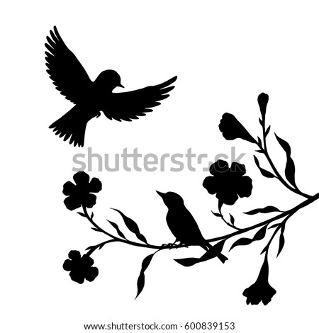 Songbird Stock Images, Royalty-Free Images & Vectors ...
