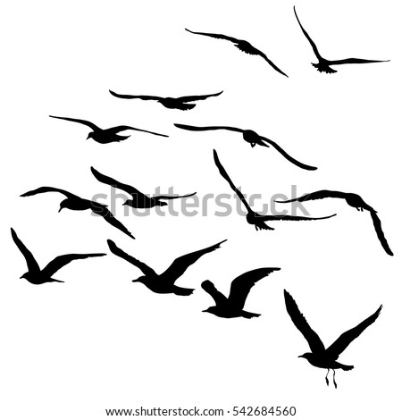 Vector Silhouettes Flying Birds Isolated Black Stock Vector