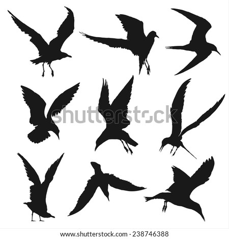 Vector silhouettes of seagulls - stock vector