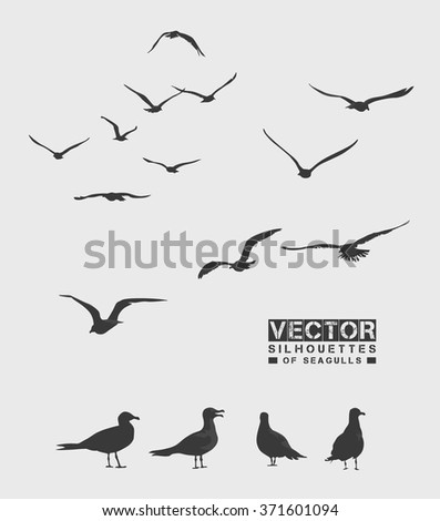 Vector silhouettes of seagulls. Isolated birds on grey background. - stock vector