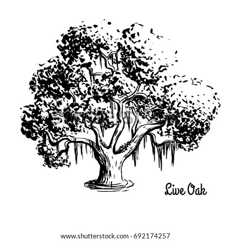 how to draw tree silhouette